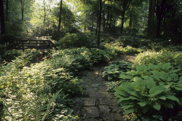 Valuer les contraintes du site espace pour la vie - Sous bassement en bois ...