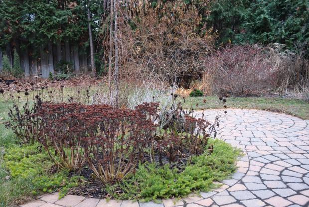 Pruning perennials