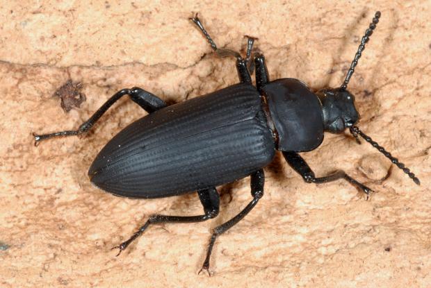 les noms scientifiques des insectes
