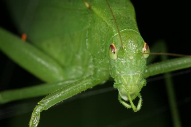 Quel insecte fait du bruit la nuit - Bruit dans les combles la nuit ...