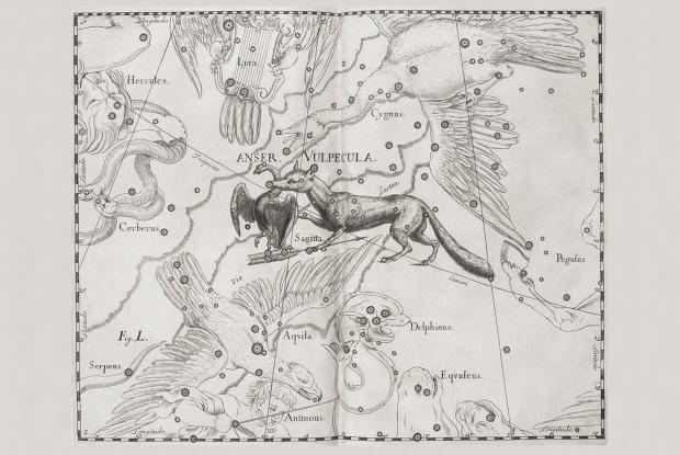 Vulpecula, Anser, Sagitta by Hevelius (1690)