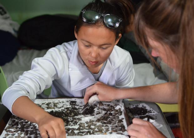 Été 2016, jeune inuite triant les papillons échantillonnés la nuit précédente