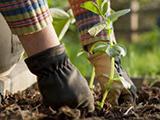 Programme mon jardin