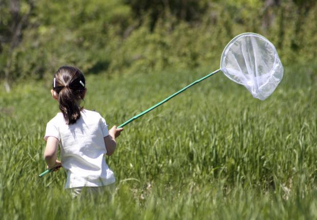 Young girl hunting butterflies