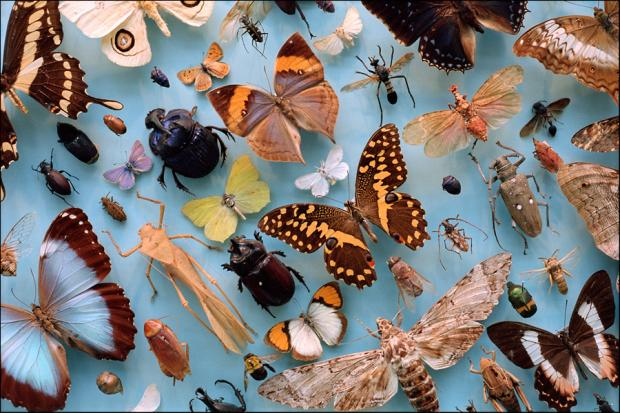 Collection of insects