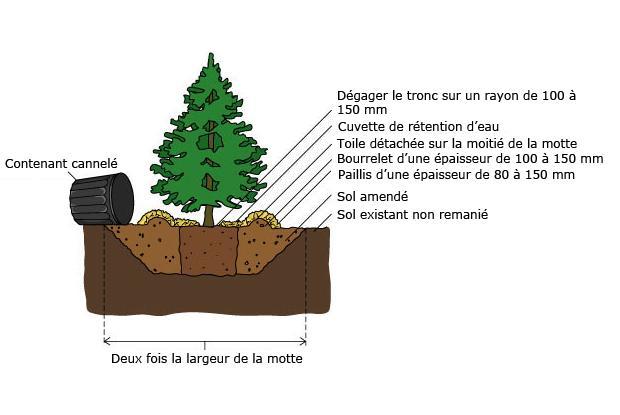 Arbres et arbustes en contenants