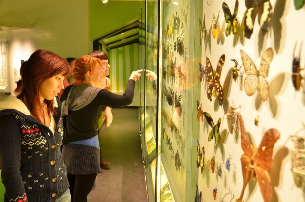 Visitors at the Montréal Insectarium
