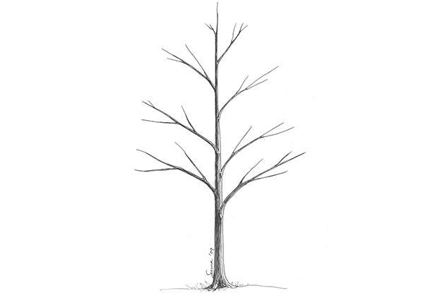 Répartition verticale des branches