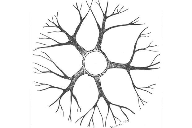 Répartition des branches - vue en plongée