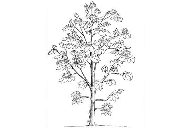 Conservation des branches basses temporaires