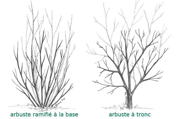 taille des arbustes feuillus | espace pour la vie