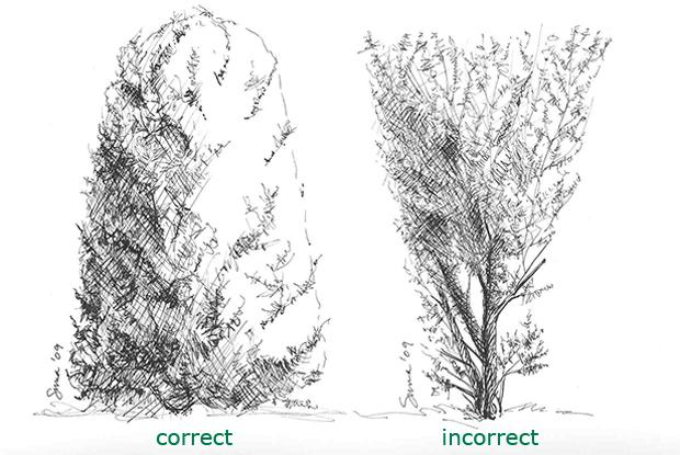 Pruning a formal hedge