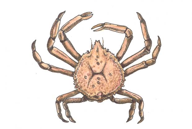 картинки жука паука и краба мамка менее