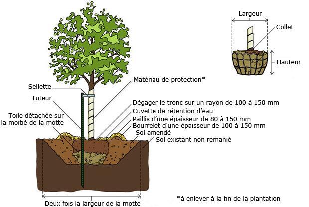 Arbres et arbustes en mottes