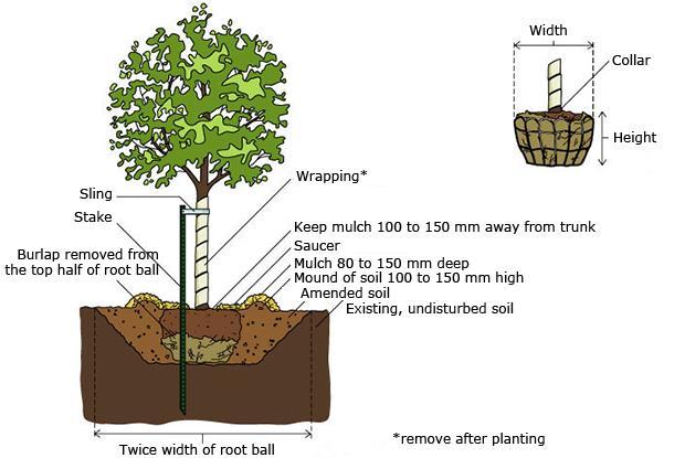 when to plant shrubs