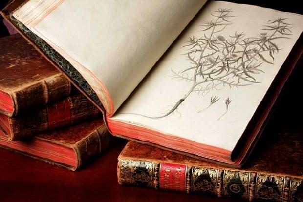 Botanical Garden Library's collection of rare books: Flora Danica