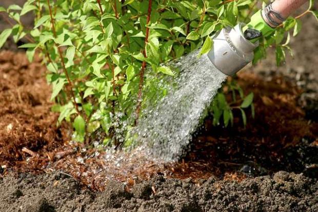 Horticultural techniques - Planting shrubs