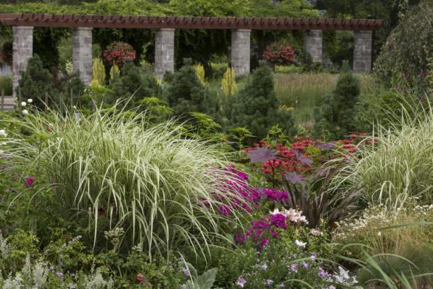 Grasses flowerbeds