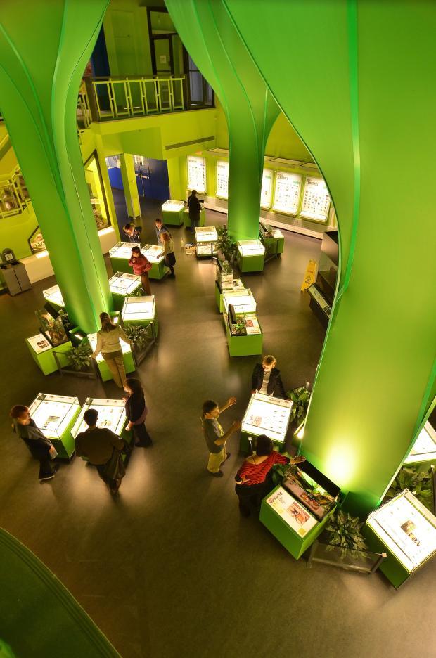 Visiteurs à l'exposition permanente Nous les insectes.