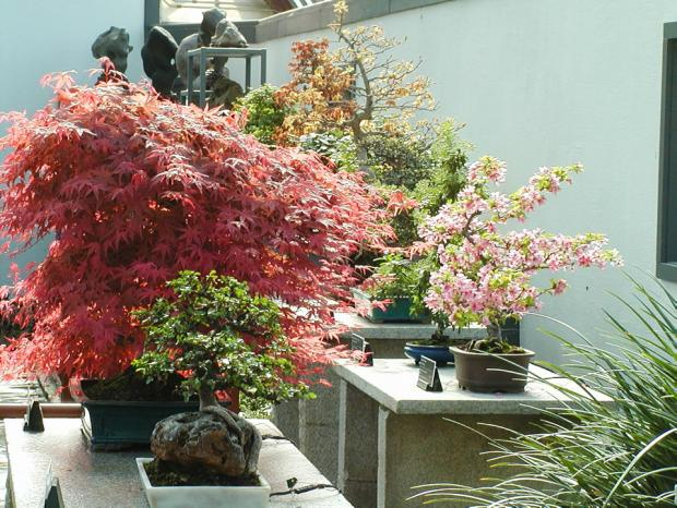 Les arbres miniatures du jardin c leste espace pour la vie for Les arbres du jardin