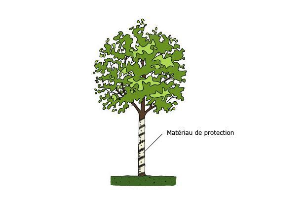 Protection du tronc