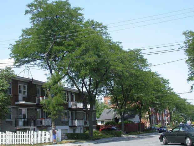 Trees along an urban street