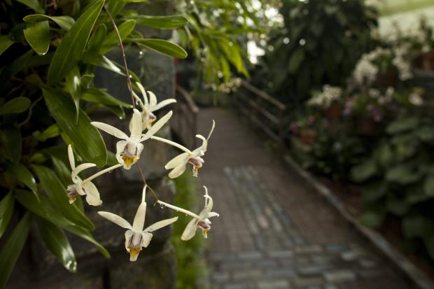 Orchids and Aroids Conservatory.