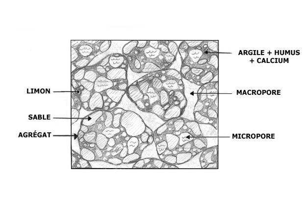 Structure du sol