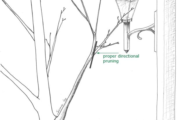 Directional pruning