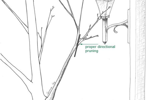 Directional pruning