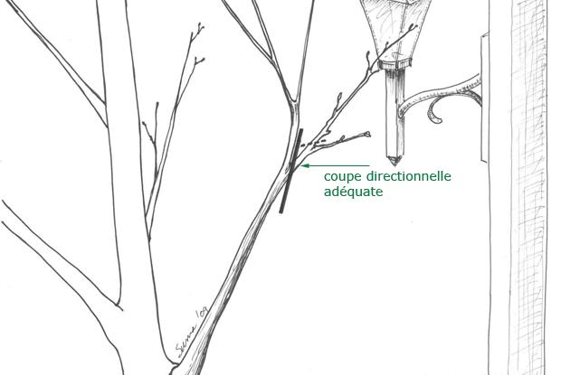 Coupe directionnelle