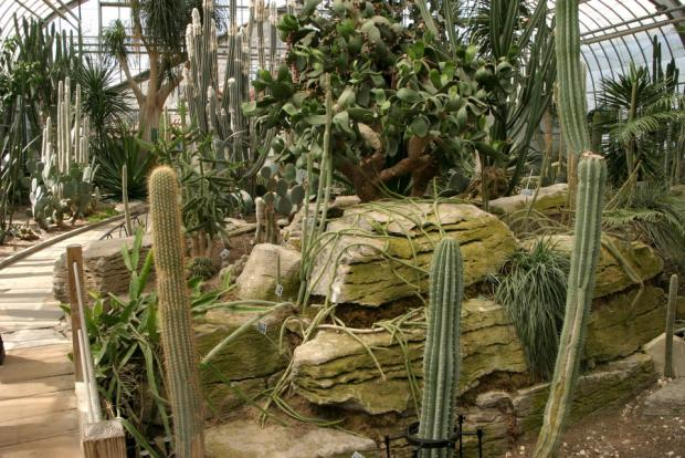 The collection of cacti in the Arid Regions Conservatory.