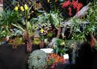 Orchidexpo 2017: the Botanical Garden distinguishes itself