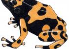 Dendrobates leucomenas