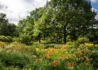 Ruisseau fleuri