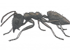 Technomymex albipes
