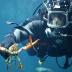 Plongeur au travail.