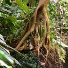 L'écosystème de la forêt tropicale humide