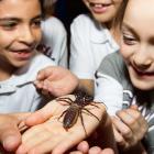 Les super insectes en tournée