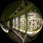Murale d'insectes des Forêts tropicales - Océanie