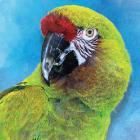 Tropical Adventure 2015