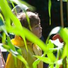 Camp de jour en botanique
