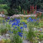 Jardin alpin - Vue générale