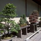Bonsai Courtyard