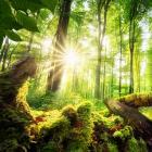 Défi biodiversité -  Thumb