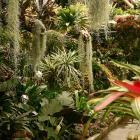 Les plantes épiphytes vivent perchées sur les arbres à la Serre de la forêt tropicale humide.