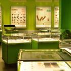 Insectarium.