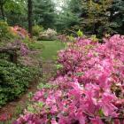 Jardin Leslie-Hancock