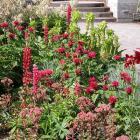 Inspecter le jardin régulièrement