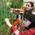 Educational activity at the Botanical Garden